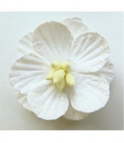 FLEURS BLANCHES MD RB2235 X6