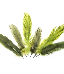PLUMES TONS VERTS X  15
