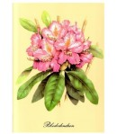 IMAGE 3D RHODODENDRONS 24X30