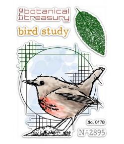 TAMPONS TRANSPARENTS BIRD STUDY PS6056 CIAO BELLA